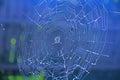 Spiderweb on blue background Royalty Free Stock Photo