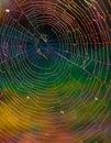 Spiderweb brightness Royalty Free Stock Photo