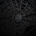 Spiderweb close up of Royalty Free Stock Photo