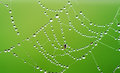 Spiderweb covered with dew on green background Royalty Free Stock Images