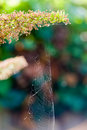 Spiderweb in nature Royalty Free Stock Photography
