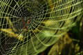Spiderweb spider hunting insects on Royalty Free Stock Photo