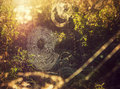 Spiderweb in sun a the bright sunshine Royalty Free Stock Photography