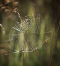 Spiderweb on a sunny morning Stock Photo