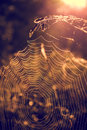 Spiderweb sunrise with a in the foreground Royalty Free Stock Photo