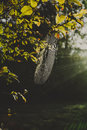 Spiderweb on a tree morning in autumn forest Stock Photos