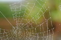 Spiderweb the waterdrops show the beauty of a left in holland Royalty Free Stock Image