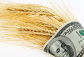 Spikes of wheat wrapped in dollars Royalty Free Stock Photo