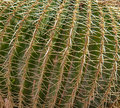 Spikey cactus macro with close up of spikes Royalty Free Stock Images