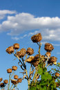 Spiky artichoke wiht clouds in the background Royalty Free Stock Photos