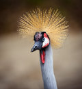 Spiky Haired Bird Royalty Free Stock Photo