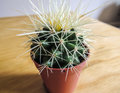 Spiky potted cactus close-up Royalty Free Stock Photo