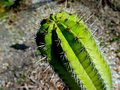Spiky Cactus From the Top Royalty Free Stock Photo