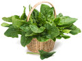 Spinach fresh leaves of in basket on white Stock Photos