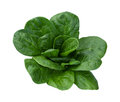 Spinach Isolated Royalty Free Stock Images