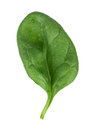 Spinach leaf Stock Photos