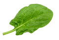 Spinach leaf close up isolated on white without shadow Royalty Free Stock Photo
