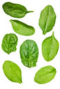 Spinach leaf isolated Stock Photography