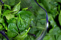 Spinach leaves in a blender main ingredient of smoothie Royalty Free Stock Photography