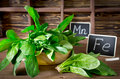 Spinach rich in vitamin c manganese and iron on a dark background Royalty Free Stock Image