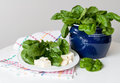Spinach still life fresh in a clay pot feta cheese and garlic cloves on a white plate Royalty Free Stock Image