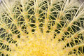 Spines on the cactus macro close up Royalty Free Stock Image