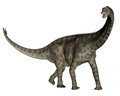 Spinophorosaurus dinosaur standing d render in white background Royalty Free Stock Photo