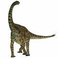 Spinophorosaurus on white is a sauropod dinosaur from niger that lived in the jurassic period Royalty Free Stock Photos