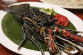 Spiny Lobster from Goa, India Royalty Free Stock Photo
