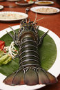 Spiny lobster from goa india also known as rock lobsters and crayfish Royalty Free Stock Image