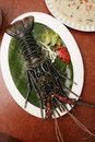 Spiny lobster from goa india also known as rock lobsters and crayfish Royalty Free Stock Photography