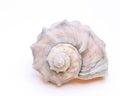 Spiny seashell isolated on white background Stock Image