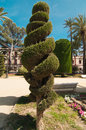 Spiral conifer and palm trees in Cadiz Stock Images