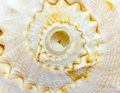 Spiral loops of a sea shell Royalty Free Stock Photo