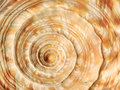 Spiral on sea shell Royalty Free Stock Photo