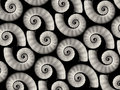 Spiral sea shells background Royalty Free Stock Photos