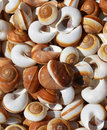 Spiral sea shells background collection of Royalty Free Stock Images