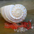 Spiral Seashell and Stones Royalty Free Stock Photo