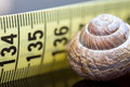 Spiral shell and line. symbol of small size. macro closeup Royalty Free Stock Photo