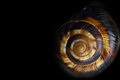 Spiral snail shell Royalty Free Stock Photo