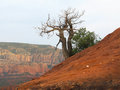 Spiral vortex tree Royalty Free Stock Photo