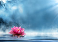 Spirituality zen with waterlily in peaceful scenery Royalty Free Stock Photos