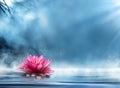 Spirituality zen with waterlily Royalty Free Stock Photo