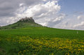 The spis castle with flowers on meadow spissky hrad national c medow cultural monument unesco ruins of medieval slovakia Royalty Free Stock Photography