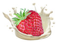 Splash of milk and strawberry. Closeup. Royalty Free Stock Photo