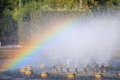Splashing water of a fountain with rainbow beautiful on the fountains Royalty Free Stock Photo