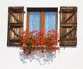 Splendid flowering window with pots of Geraniums Royalty Free Stock Photo