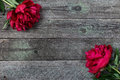 Splendid pink peonies flowers on rustic wooden background. Selective focus Royalty Free Stock Photo