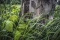 Splendor in the Grass Royalty Free Stock Photo