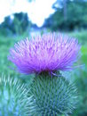 Splendour in the Field Royalty Free Stock Photo